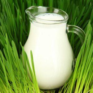 В Программу по разработке стандартов для регламента на молоко запланировано внести изменения